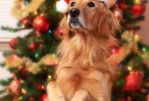Christmas 2 / by Suzie White