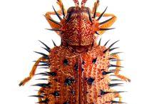 Hmyz a podobné příšery