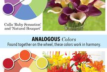Colors Flower beds