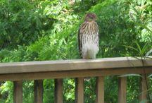 Wildlife out my back door / Wildlife