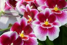 Delicadeza - Flores e Jardinagem