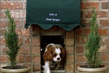 Dog Friendly Home / dog crates, doggy doors, doggy decorating! great ideas for you pet in your home