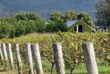 vineyard love