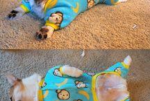 ropa de mascotas