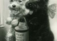 Vintage dog ads