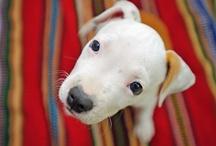 Too Cute Puppy Love! / by Paula-A Balanced