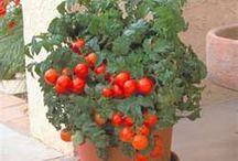 planting / Growing / Gardening / planting / Growing / Gardening