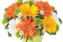 Summer Bouquets / Get your Summer lovin' on with some flowers!
