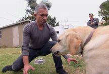 The Dog Whisperer - Cesar's Worst Bite
