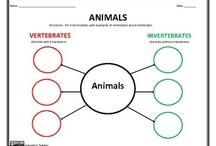 Zoology - Invertebrates