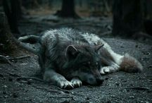 World of a Wolf