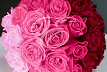 Weddings & Flowers / by Eufloria