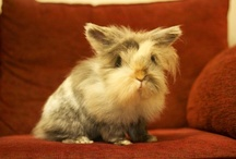 BUNNIES / Its not all about being cool, follow the cutest board in town.