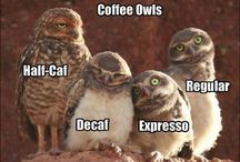 Which kind of coffee are you?