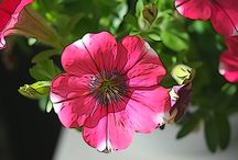 Photo Art / Flowers