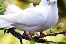 Sweets birds