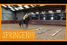 paardenpraat tv