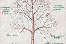 Garden ~ Shrubs & Trees