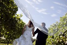 Vows in the Vines / Set amongst sprawling vineyards and established deciduous trees within a 20,000 year old extinct volcanic basin, Villa Maria Estate is a unique and romantic location for your special day.