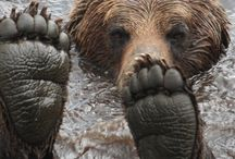 Bear with me. / by Susan Strohl
