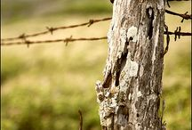 alambradas y postes