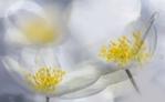 Flowers Fine Art