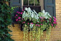 Virágok kintre, ablakba