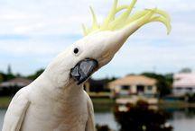 Australian Animals & Birds