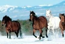 HORSE / by Lorraine