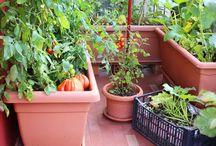 Grønnsaks dyrking i potte