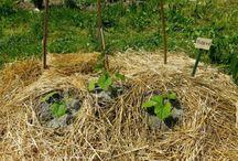 My blog - vegetable garden