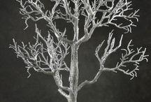 one tree / by Shawna Martinez