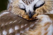 Birds / by Michelle Hock