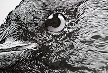 Pen and Ink / Pen and ink examples and techniques