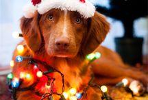 Its christmas time ❤️