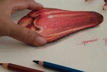 pencil colour 2