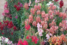 Szép kertek, növények