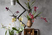 Orchid twister / Met de Orchid Twister brengt ontwerper François Hannes een product op de markt dat voor iedereen toegankelijk is en voor veel toepassingen geschikt is. Dit gaat in samenwerking met Art of Life, bestaande uit alle Nederlandse Orchideeënkwekers. De Orchidee maakt het interieur op een makkelijke manier bijzonder en creëert steeds weer een eigen sfeer in huis.