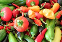 [ Chili Pepper Types and Info ] / Get information on a variety of chili pepper types, ranging from the mildest bell to the hottest of the superhots.