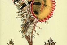 Shell's illustration