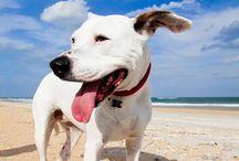Puppy Love / by Elaine Bruning-Barnhardt