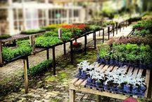 Primavera Garden - Nossa Estufa / Nossa estufa é um pedaço do paraíso. Tão agradável que os visitantes não resistem e tiram fotos cada dia mais lindas.