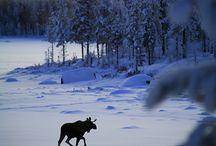 Winter wonderland animals