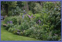 Tuinieren: blauwe bloemen