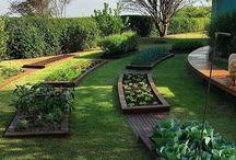 Jardim Vertical | Hortas | Vegetação