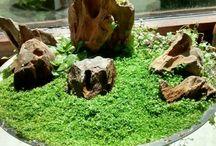 nano-garden