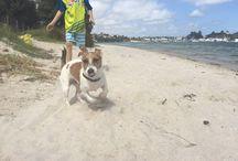 Swan River Dog Beaches