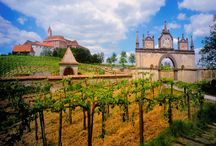 Vineyards & Vines