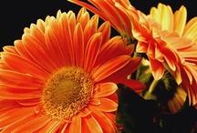 Flowers / by Anne Jensen