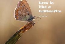 Vlinder / Alles wat maar met vlinders te maken heeft